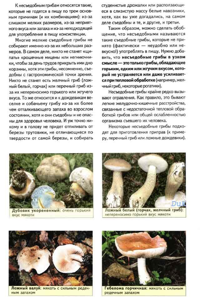 Ядовитые грибы и ягоды доклад 1396