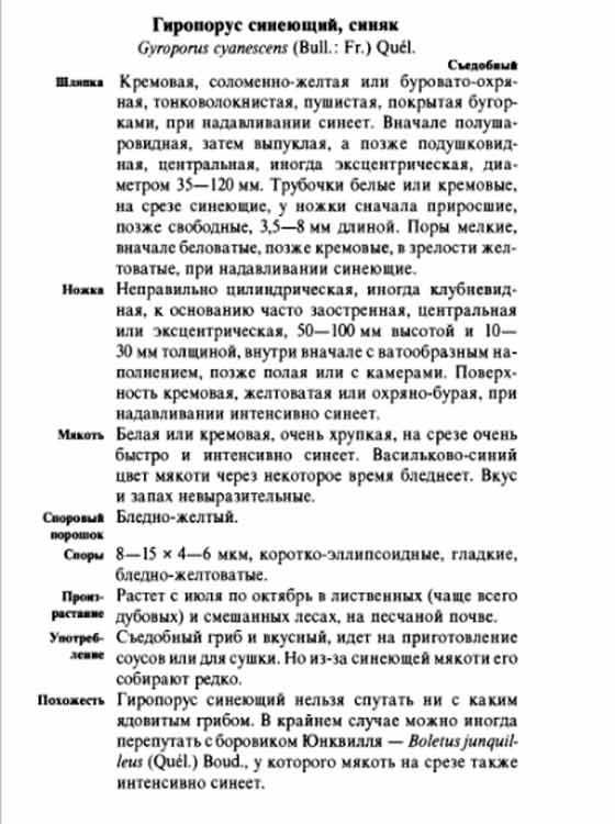 гриб синяк описание и фото