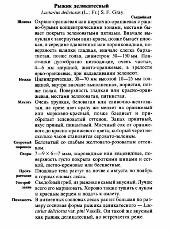 рыжики грибы описание и фото