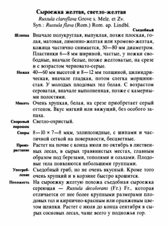 желтая сыроежка фото и описание