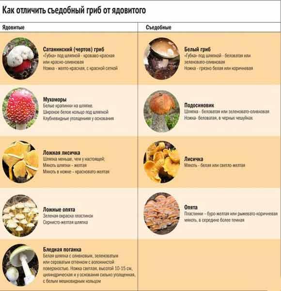 отличия съедобных грибов от несъедобных фото